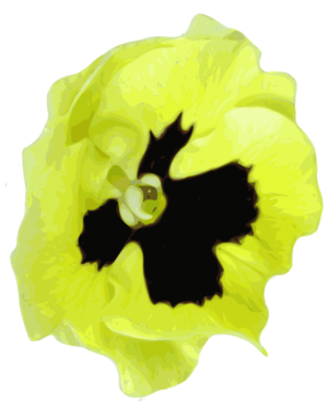 clip art clipart svg black 花朵 nature pansy plant public domain yellow blossom traced 剪贴画 黑色 黄色 植物