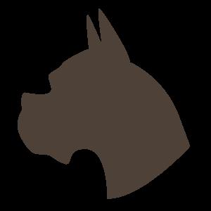 动物,彩色 1440