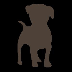 动物,彩色 1433