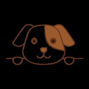 动物,彩色 1458