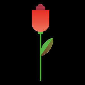 彩色,植物 1902